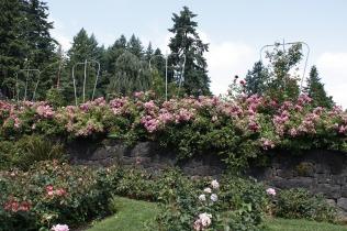 rose-1178415_1280